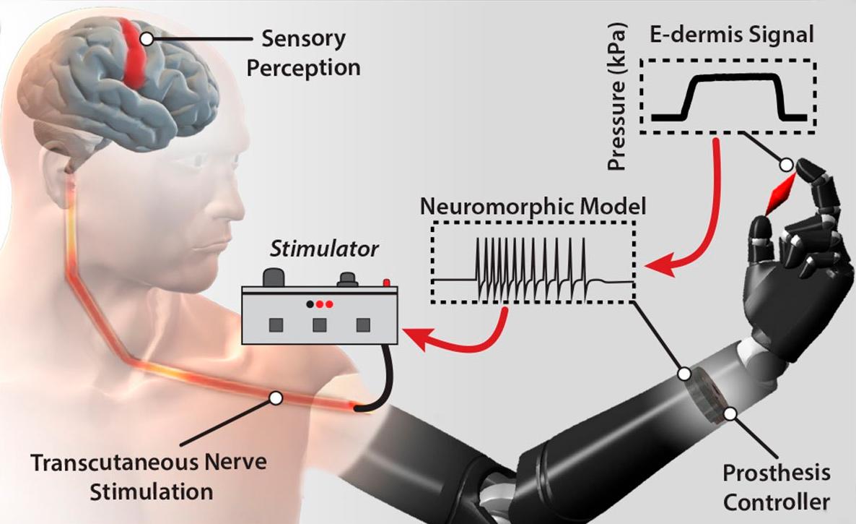 Американские инженеры создали электрическую кожу