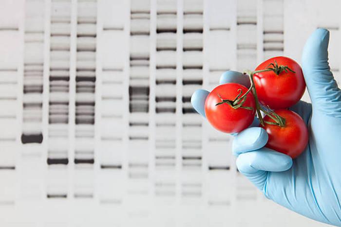 ДНК помидоров помогут отличить качественные имплантаты от подделок